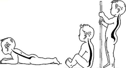 Формирование изгибов у ребенка