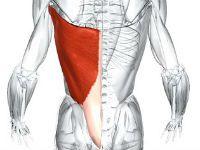 Широчайшая спинная мышца